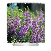 Purple English Garden  Shower Curtain