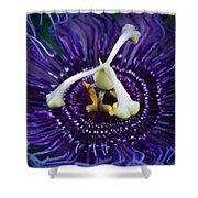 Purple Flower 3 Shower Curtain