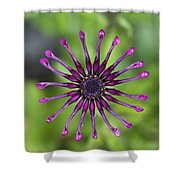 Purple Flower In Bloom Shower Curtain