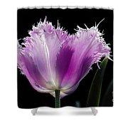 Purple Glow Shower Curtain