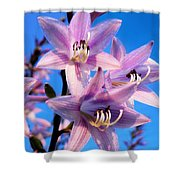 Purple Hosta Blooms Shower Curtain