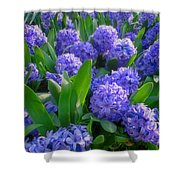 Purple Hyacinths Shower Curtain