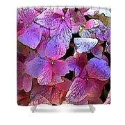 Purple Hydrangea Shower Curtain