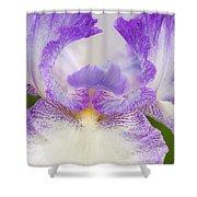 Purple Iris Bliss Shower Curtain