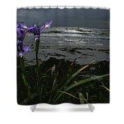 Purple Irises On Beach Shower Curtain