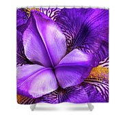Purple Japanese Iris Shower Curtain