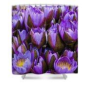 Purple Lotus Shower Curtain