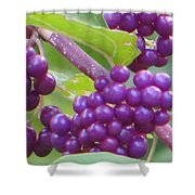 Purple Magical Spheres Shower Curtain