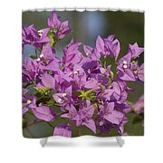 Purple Of The Bougainvillea Blossoms Shower Curtain