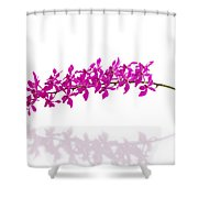 Purple Orchid Bunch Isolated Shower Curtain