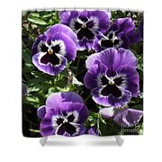 Purple Pansies Square Shower Curtain