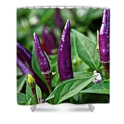 Purple Pepper Life Cycle  Shower Curtain