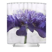 Purple Pincushin Shower Curtain