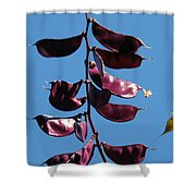 Purple Pods Shower Curtain