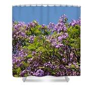 Purple Prelude Shower Curtain