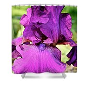 Purple Purity Shower Curtain