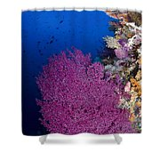 Purple Sea Fan In Raja Ampat, Indonesia Shower Curtain