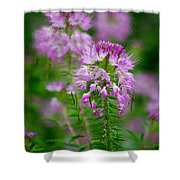 Purple Serenade Shower Curtain