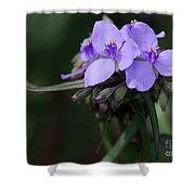 Purple Spiderwort Flowers Shower Curtain