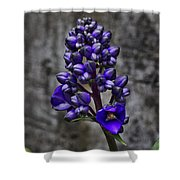 Purple Splendor Shower Curtain