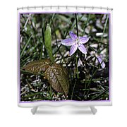 Purple Spring Trail Flower Shower Curtain