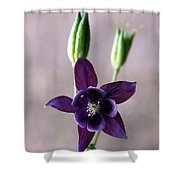 Purple Star Shower Curtain