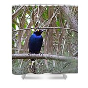 Purple Starling Shower Curtain