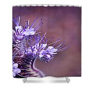 Purple Tips Shower Curtain