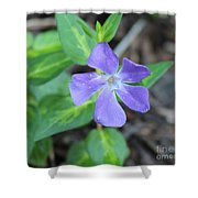 Purple Vinca Shower Curtain
