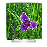 Purple Water Iris Shower Curtain