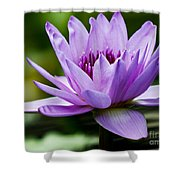 Purple Petals Water Lily Shower Curtain