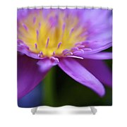 Purple Water Lily Petals Shower Curtain