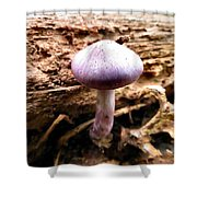 Purple Wild Mushroom Shower Curtain