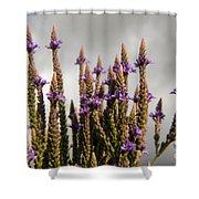 Purple Wildflowers  Shower Curtain