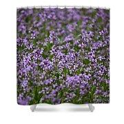 Purple Wildflowers Square Shower Curtain