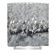 Pushing Tulips Shower Curtain