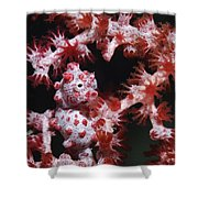Pygmy Seahorse, Indonesia Shower Curtain