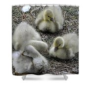 Quadruplets Qp Shower Curtain