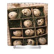 Quail Eggs In Box Shower Curtain