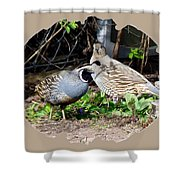Quail Mates Shower Curtain