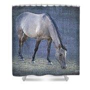 Quarter Horse In Blue Shower Curtain