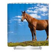 Quarter Horse Shower Curtain