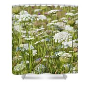 Queen Anne's Lace In All Its Glory Shower Curtain