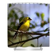 Quiet In The Shadows Shower Curtain