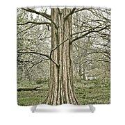 Quiet Tree Shower Curtain