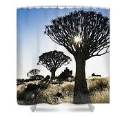 Quivertree Starburst Shower Curtain