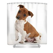 Quizzical Puppy Shower Curtain