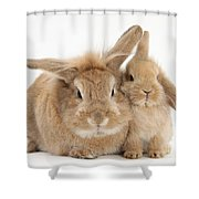 Rabbit And Baby Rabbit Shower Curtain