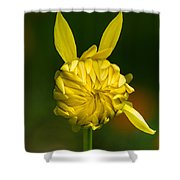 Rabbit Flower Shower Curtain