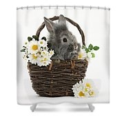 Rabbit In A Basket With Flowers Shower Curtain
